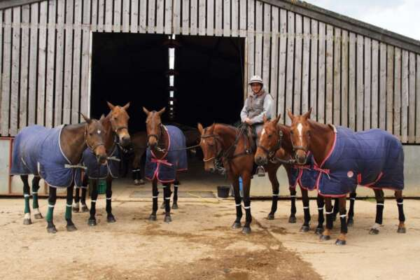 Subject Taster Day: Equine Management and Science